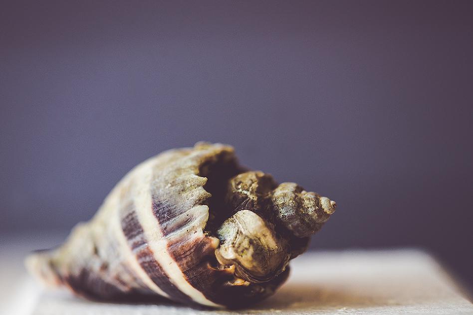 macro shell