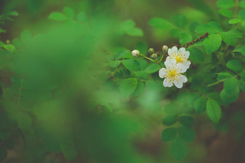 tiffany kelly white flower macro
