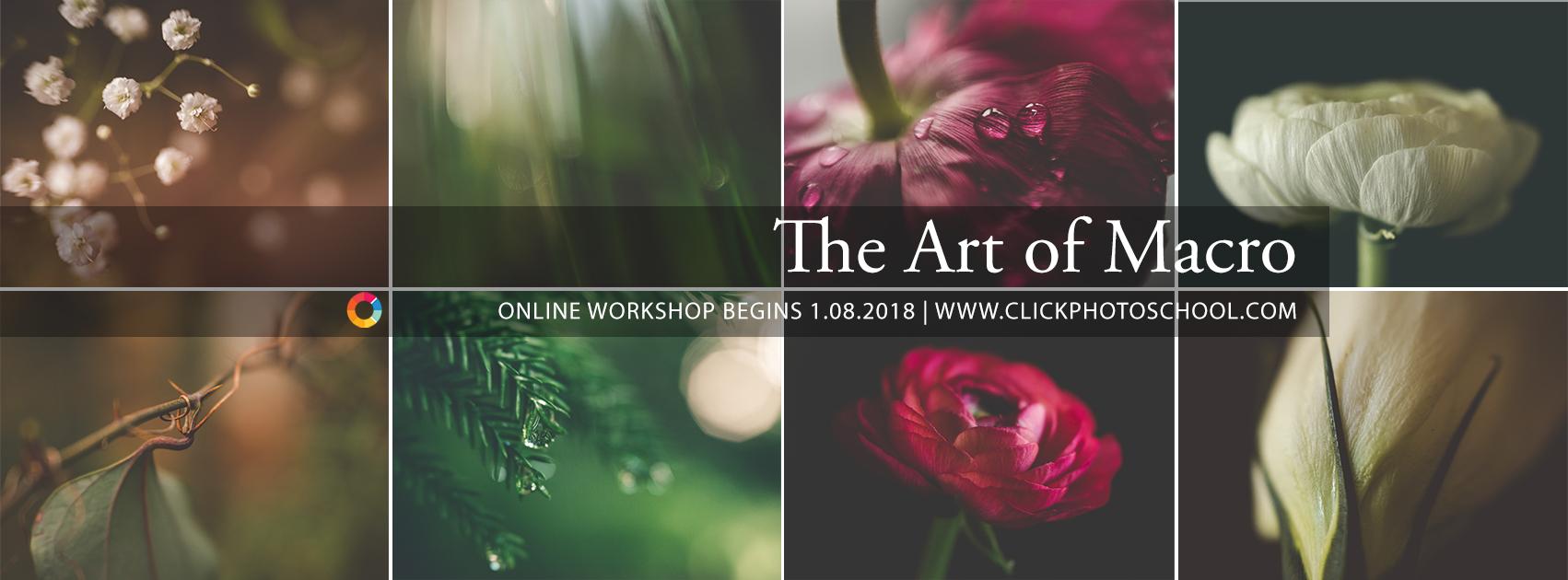 online macro photography workshop