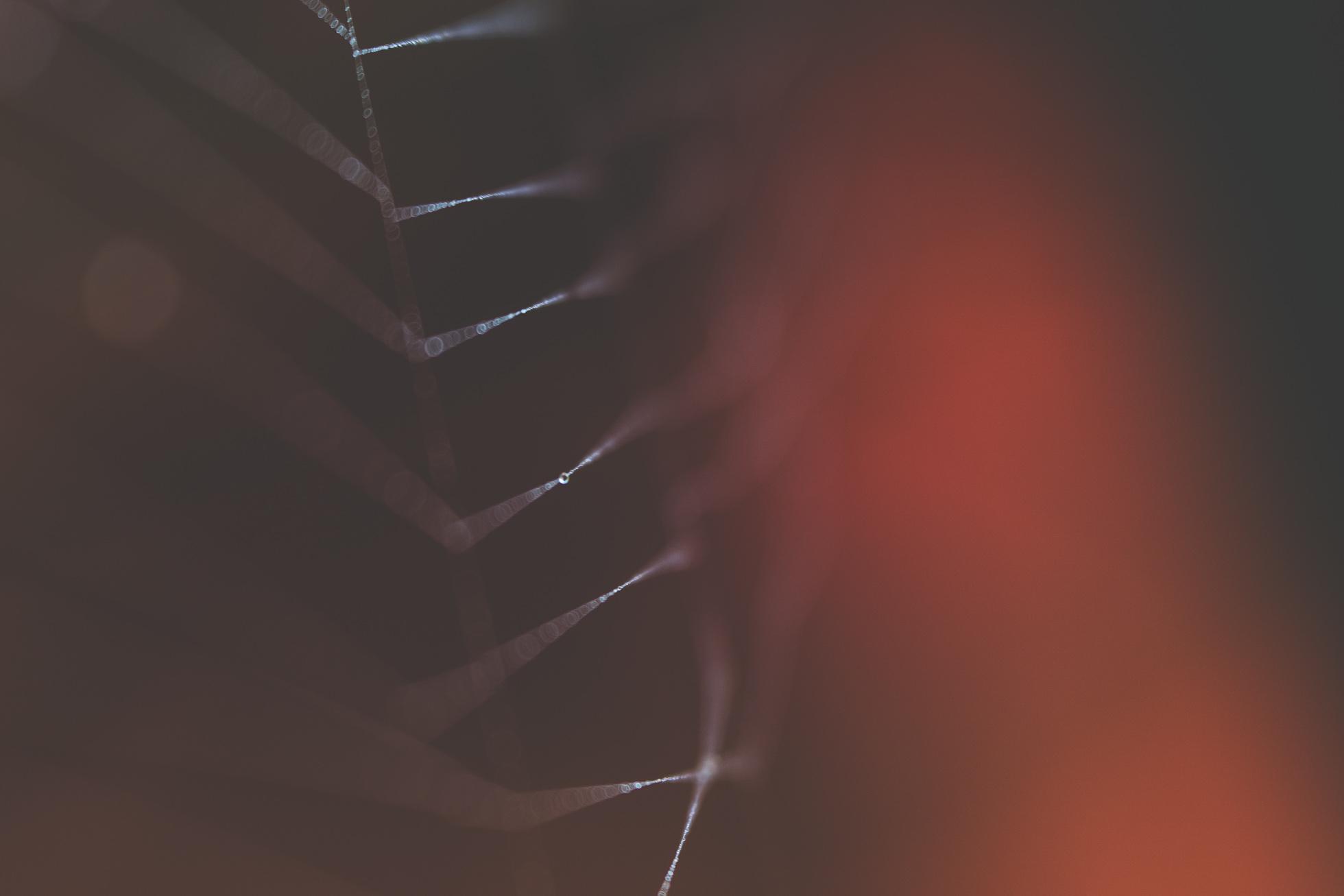 macro spider web tiffany kelly