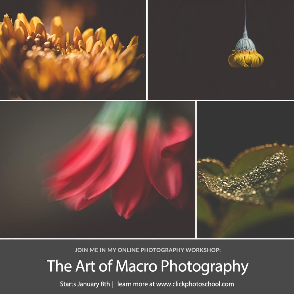 online macro workshop tiffany kelly