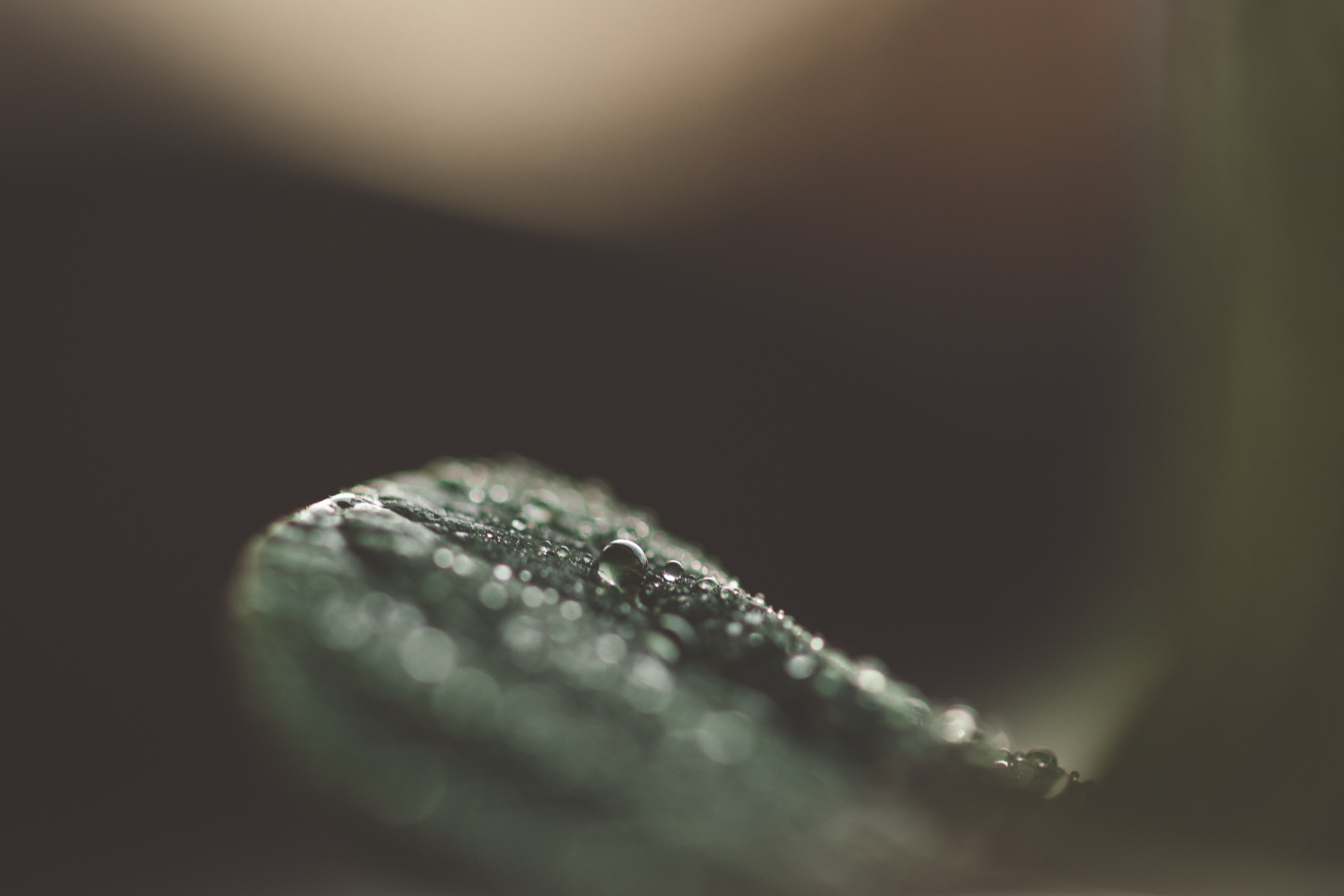 macro leaf by tiffany kelly